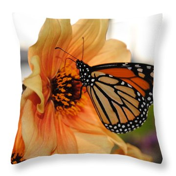 Throw Pillow featuring the photograph Colors In Sync by Michael Frank Jr