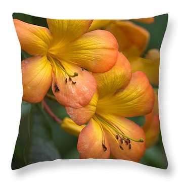 Throw Pillow featuring the photograph Colors Of The Sunset Sky by Anne Rodkin