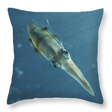 Colourful Squid, North Sulawesi Throw Pillow by Mathieu Meur
