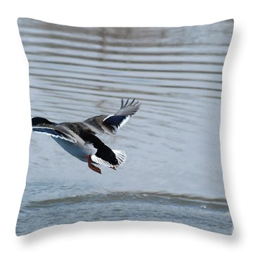 Throw Pillow featuring the photograph Coming In by Mark McReynolds