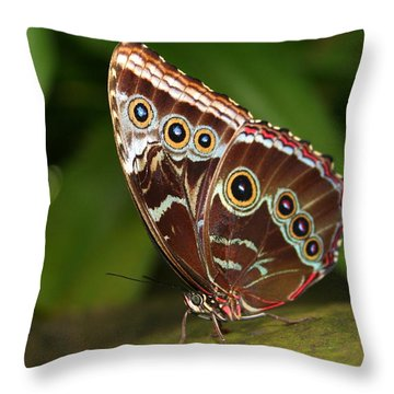 Throw Pillow featuring the photograph Common Blue Morpho by Laurel Talabere