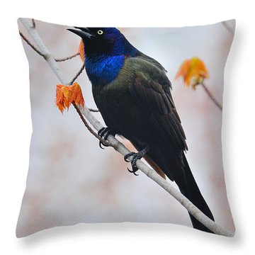 Common Grackle Throw Pillow by Tony Beck
