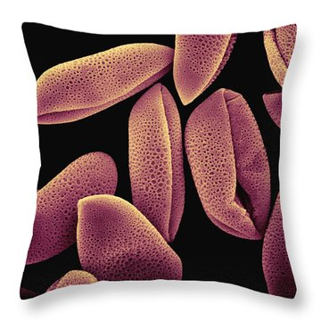 Common Hyacinth Pollen Sem At 700x Throw Pillow by Albert Lleal