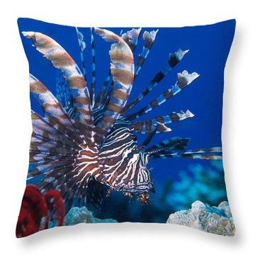 Common Lionfish Throw Pillow by Franco Banfi and Photo Researchers