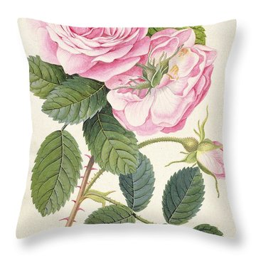 Common Provence Rose Throw Pillow by Georg Dionysius Ehret