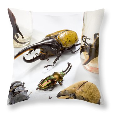 Confiscated Beetles Throw Pillow by Science Source