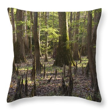 Congaree National Park  Throw Pillow by Dustin K Ryan