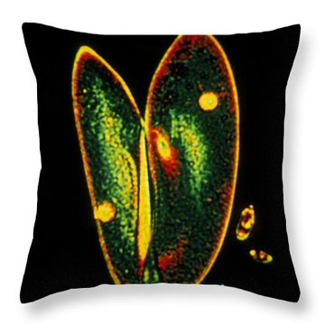 Conjugating Paramecia Throw Pillow by Eric Grave