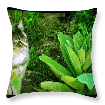 Throw Pillow featuring the photograph Contemplating The Nature Of Mullein by Susanne Still