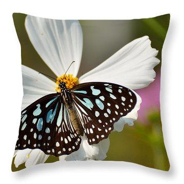 A Study In Contrast Throw Pillow by Fotosas Photography