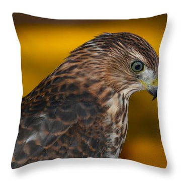 Coopers Gold Throw Pillow