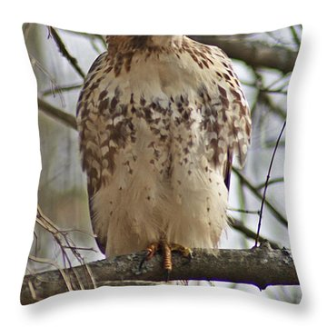 Cooper's Hawk 1 Throw Pillow by Joe Faherty