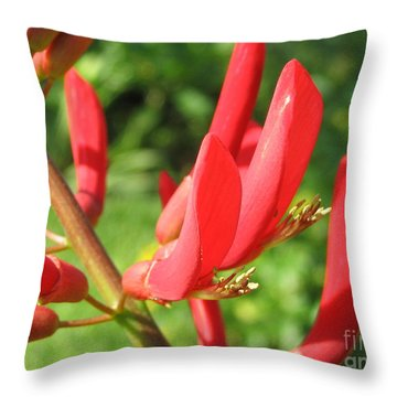 Throw Pillow featuring the painting Coral Bean Tree by Mark Robbins