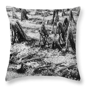 Cornfield After Hailstorm Throw Pillow by Science Source
