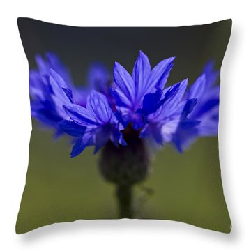 Cornflower Blue Throw Pillow by Clare Bambers