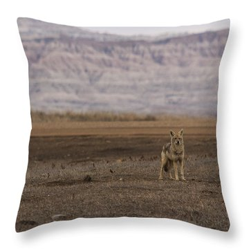 Coyote Badlands National Park Throw Pillow