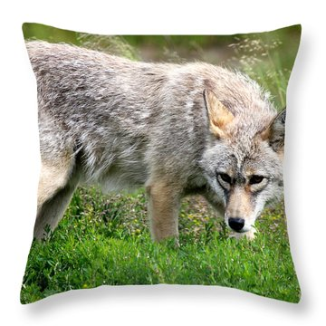 Throw Pillow featuring the photograph Coyote On The Prowl by Kathy  White