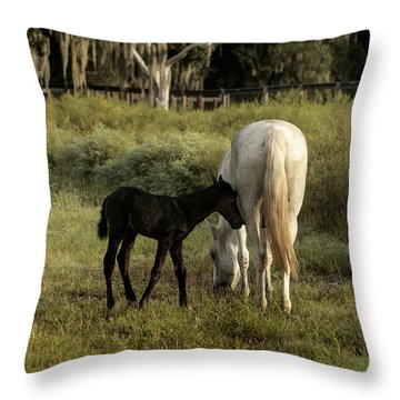 Cracker Foal And Mare Throw Pillow by Lynn Palmer