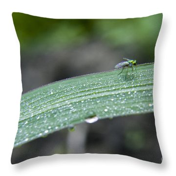 Crawling Along Throw Pillow by Darleen Stry