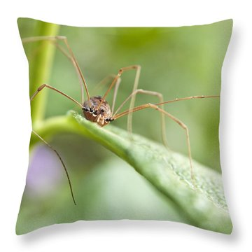 Throw Pillow featuring the photograph Creepy Crawly Spider by Jeannette Hunt
