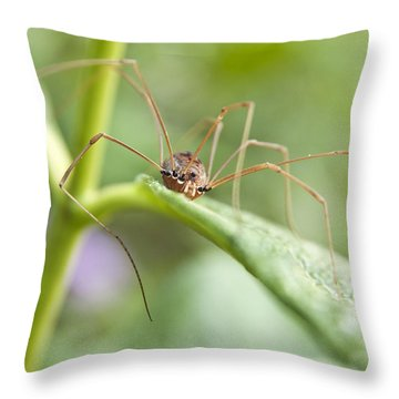 Creepy Crawly Spider Throw Pillow