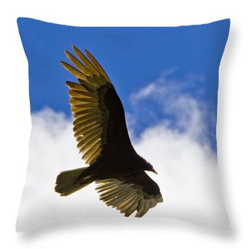 Crested Caracara Throw Pillow by Roger Wedegis