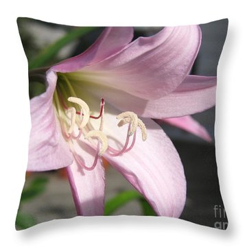 Crinum Lily Named Powellii Throw Pillow by J McCombie