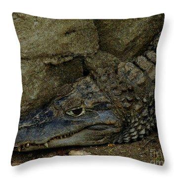 Gator Rock Throw Pillow