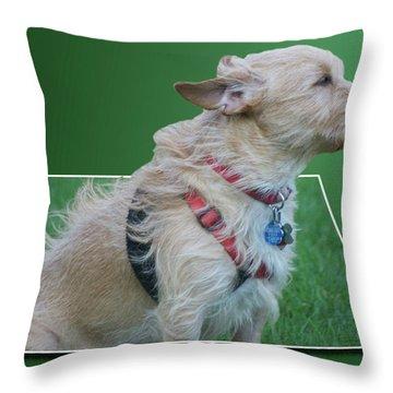 Cruz Enjoying A Warm Gentle Breeze 02 Throw Pillow by Thomas Woolworth