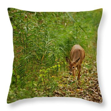 Curious Doe 9838 Throw Pillow by Michael Peychich