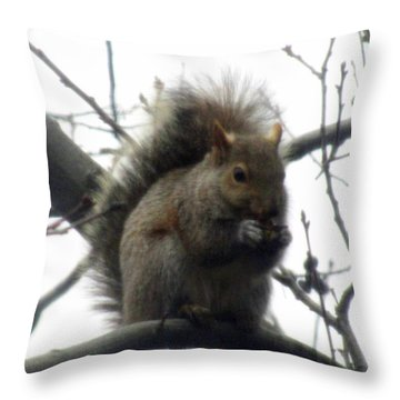 Throw Pillow featuring the photograph Curious Squirl by Danielle  Parent