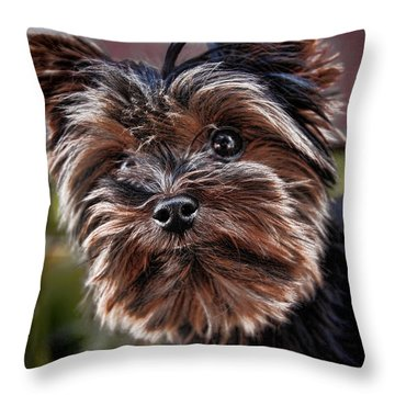 Curious Yorkshire Terrier Throw Pillow by Mariola Bitner