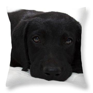 Cuteness Throw Pillow