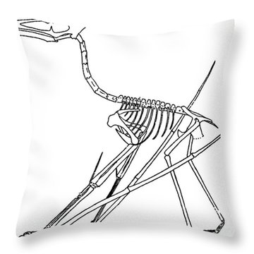 Cycnorhamphus Suevicus Throw Pillow by Science Source