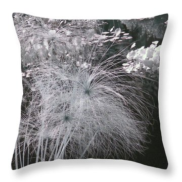 Cyperus Papyrus Throw Pillow by Christine Till