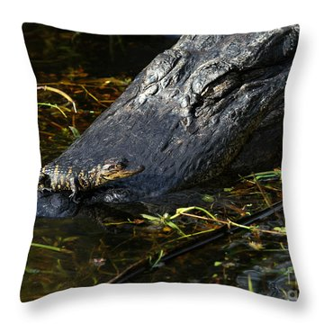 Daddy Alligator And His Baby Throw Pillow by Sabrina L Ryan