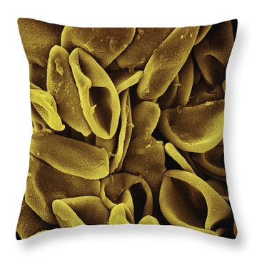 Daffodil Narcissus Sp Pollen 700x Throw Pillow by Albert Lleal