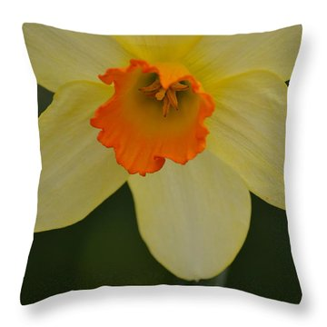 Daffodilicious Throw Pillow