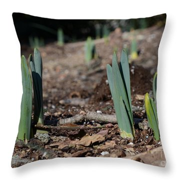 Daffodils Narcissus Throw Pillow