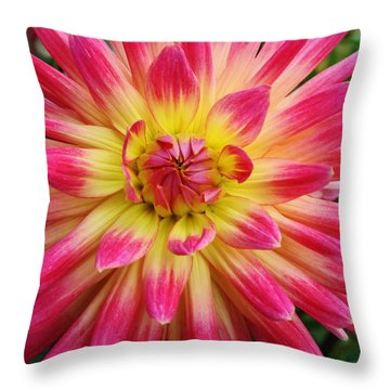 Dahlia Close-up Throw Pillow by Bruce Bley