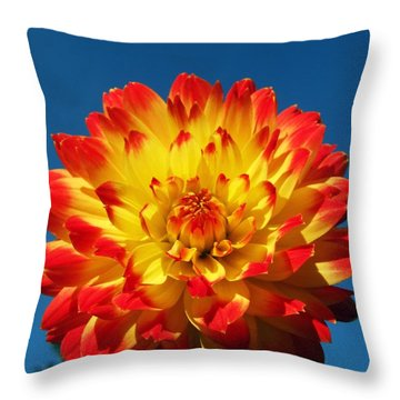 Dahlia 'procyon' Throw Pillow by Ian Gowland and Photo Researchers