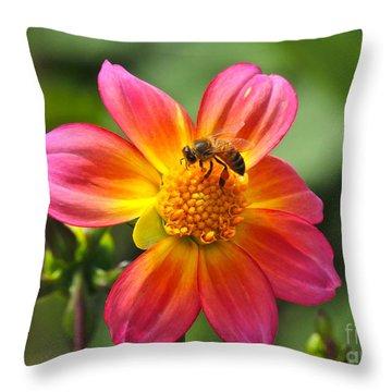 Throw Pillow featuring the photograph Dahlia Sun by Eve Spring