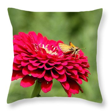 Throw Pillow featuring the photograph Dahlia's Moth by Elizabeth Winter