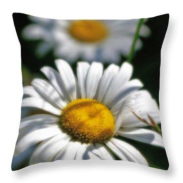 Daisies Aglow Throw Pillow