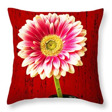 Daisy In Black Vase Throw Pillow by Garry Gay