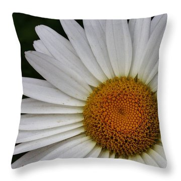Throw Pillow featuring the photograph Daisy Up Close by Bruce Bley