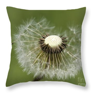 Dandelion Half Gone Throw Pillow