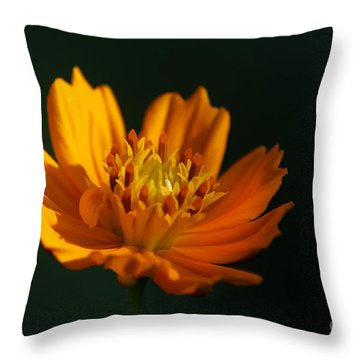 Dappled In The Morning Light Throw Pillow by Darren Fisher