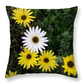 Dare To Be Different Throw Pillow by Mistys DesertSerenity