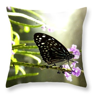 Dark Blue Tiger Butterfly In The Rain Throw Pillow